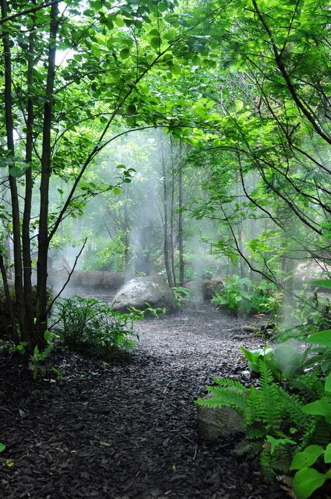Die Nebeldüsen in Aktion, im Gegenlicht kommt Regenwald-Feeling auf