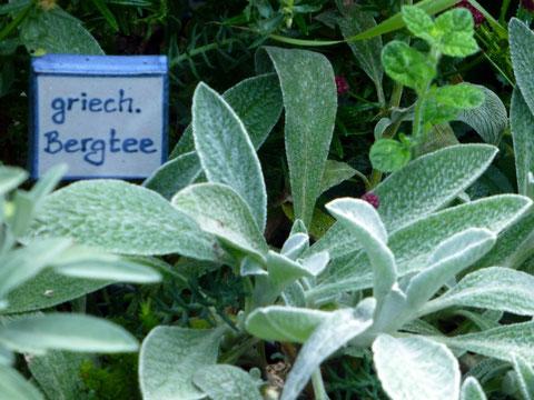 Diese Pflanze hat getrocknet die besseren Inhaltsstoffe - Zimtaroma!