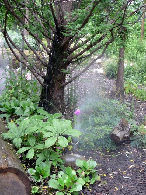 Den Blattschmuck-Stauden gefällt der Regenwald-Nebel.
