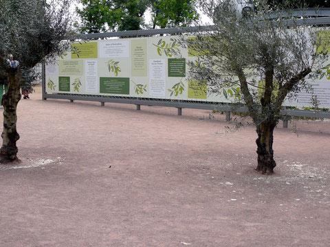 Im Hintergrund eine bespannte Wand mit Infos und Rezepten rund um die Olive.