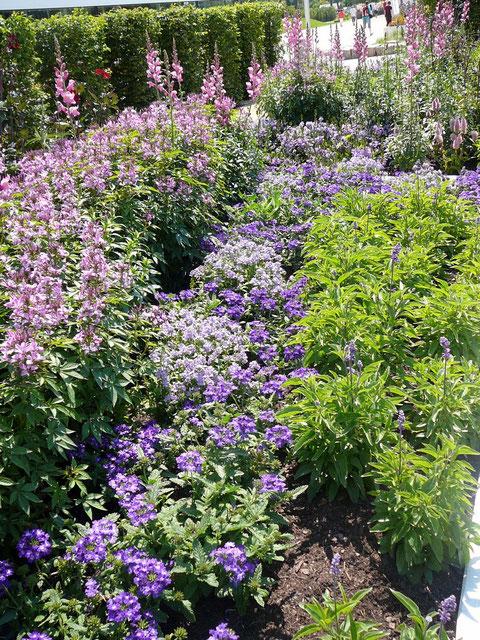 Die blauen Blumen der Hoffnung, dem Mut der Einwanderer nach Amerika.