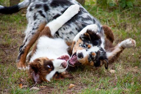 Bailey und Djego