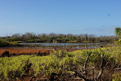 Cierro Dragon, Santa Cruz, Galapagos Brackwasser-Lagune