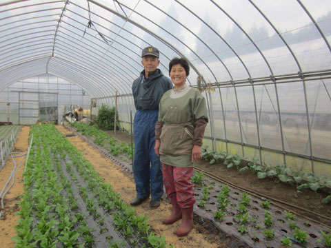 ↑高田の復興を見守りながら、元気な野菜を育てているお2人です