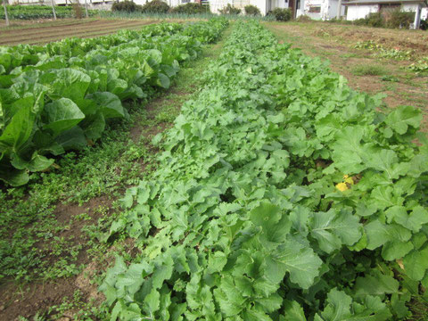 ↑丹精込めて育てられた新鮮な野菜や果物が産直はまなすに届けられます