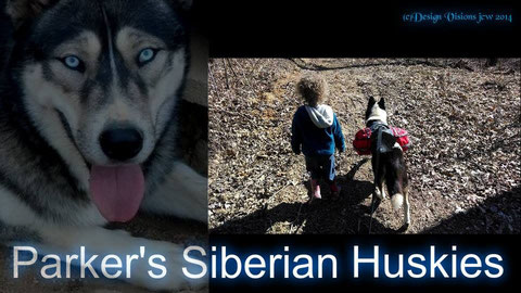 AKC Siberian Husky puppy for sale Ohio Kentucky West Virginia Pennslyvania Michigan Indiana