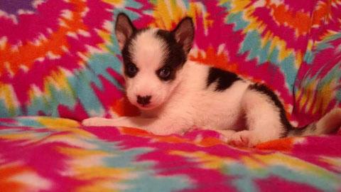 Moo at 4 weeks