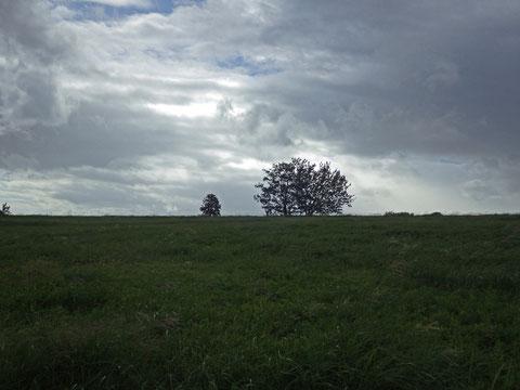 瀬谷の富良野に見えますか?