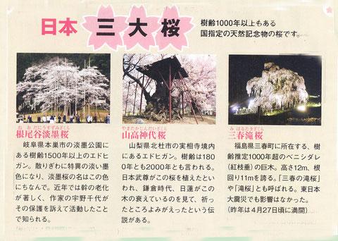 日本の三大桜