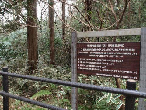 こども自然公園のホタル棲息地の一部