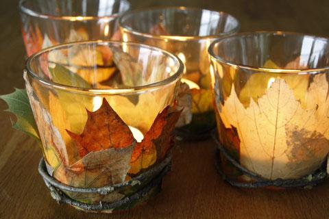 Leuchtender Herbst / brilliant fall