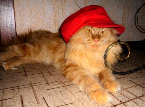 Юнкерс Олдблюз - кот кастрат