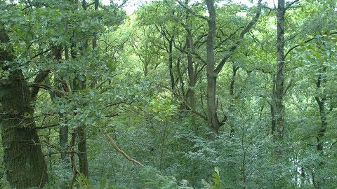 fast wie Regenwald