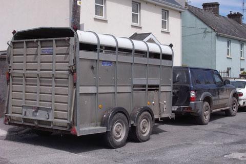 アイルランド・田舎・牛・自動車