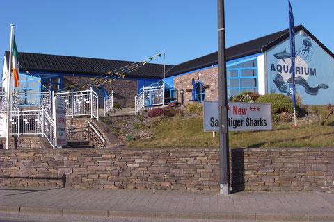 ディングル水族館