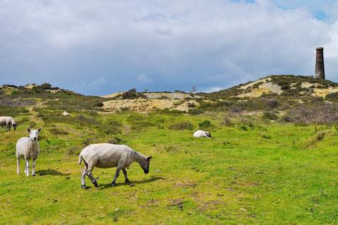 アイルランド - 羊 - 田舎 - 牧場