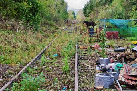 アイルランド 馬 鉄道 線路