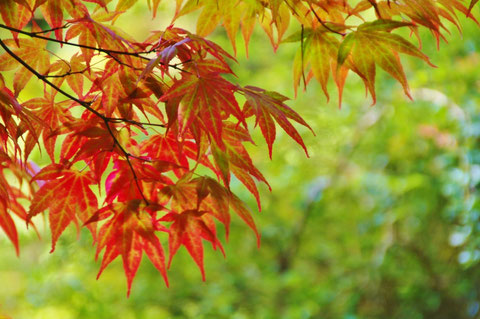アイルランド 紅葉