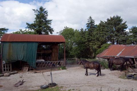 アイルランド 馬