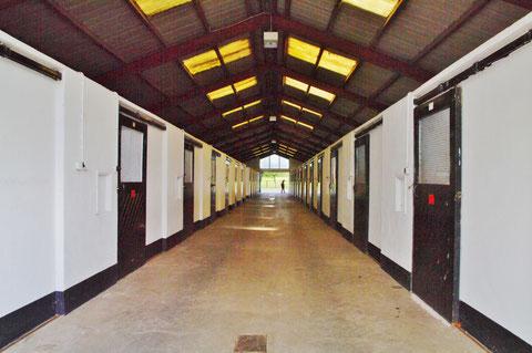 アイルランド ナショナルスタッド アイルランド観光 馬