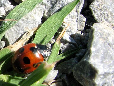 アイルランド 昆虫