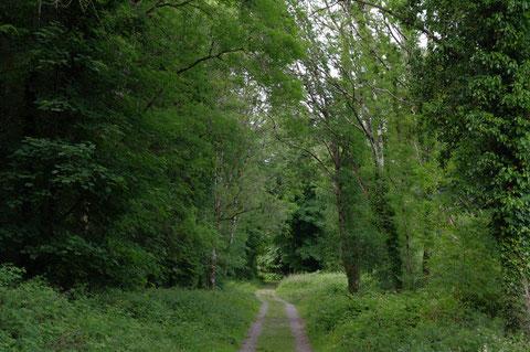 アイルランド 森の中