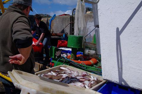 アイルランド 漁港