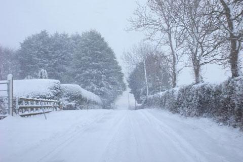 アイルランド 雪