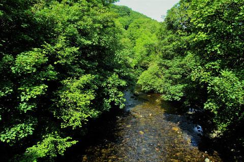 アイルランド - 旅行 - 田舎 - 川