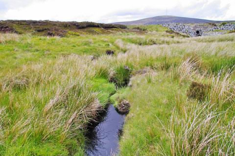 アイルランド リフィー川 源流