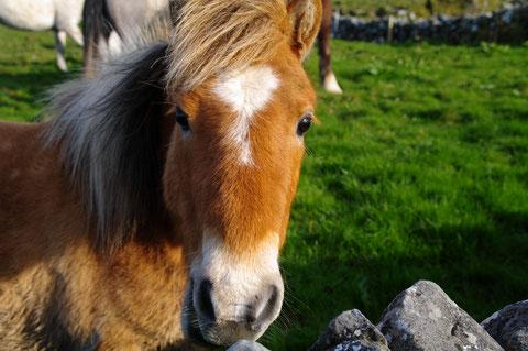 バレン高原の馬