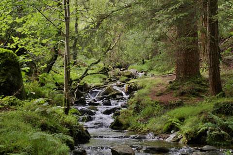 アイルランド - 田舎 - 景色 - 川