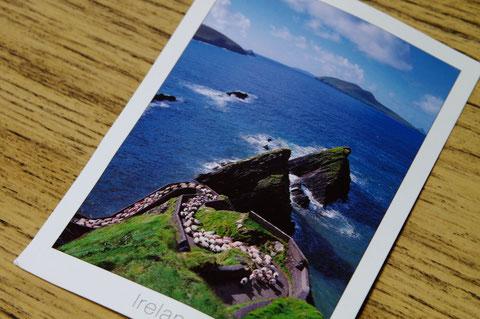 アイルランド ディングル半島 羊