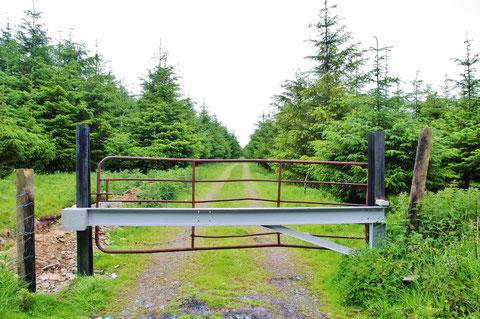 アイルランド - 田舎 - 農道 - 林道