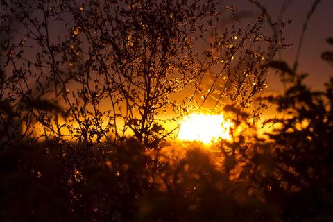 Sonnenuntergang in Plieningen 21.08.2016