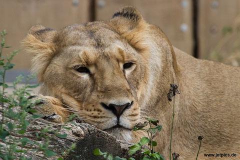 Zoo Frankfurt 04.09.2015