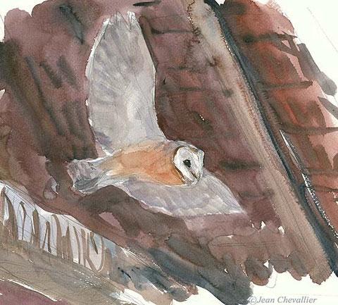 barn owl JeanChevallier