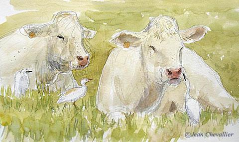 vaches et hérons gardeboeufs