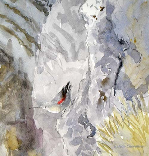 tichodrome (tichodroma muraria)