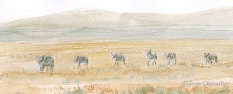 meute de loups aquarelle Jean Chevallier
