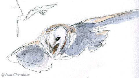barn owl Jean Chevallier