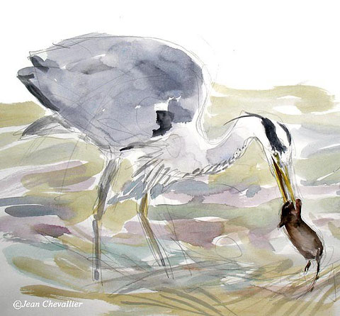 heron and vole Jean Chevallier