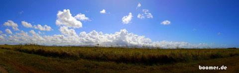 Zuckerrohr-Plantagen soweit das Auge reicht