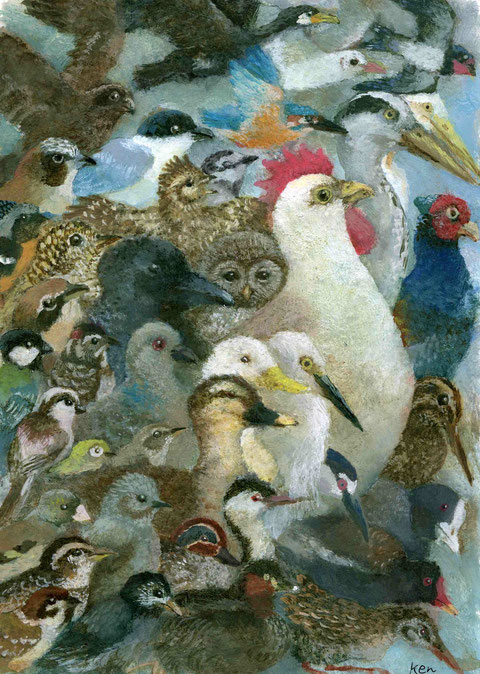 ニワトリと家の周りで見られる野鳥たち