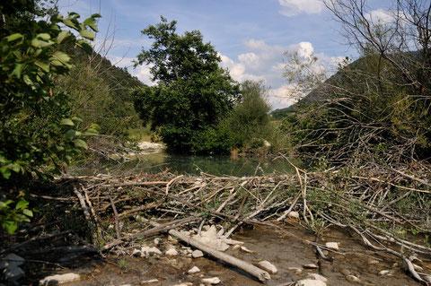 Barage de Castor - La Charce (26) - 11/07/2011