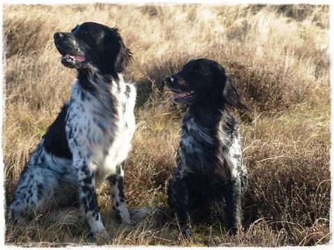 Die Hunde: Arven und Akira