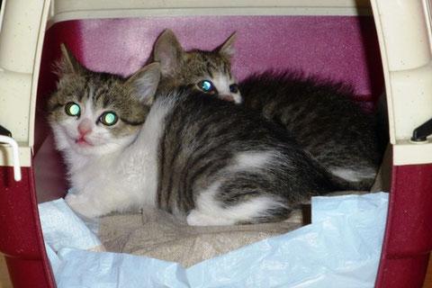 Daisy und Merlin - echte Wildfänge