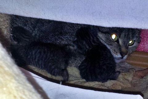Sally und ihre Kitten