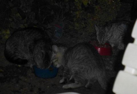 neue Kitten im Altenheim