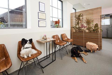 Wartezimmer Tierarztpraxis zur Schmiede